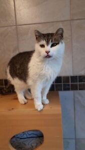 "Senior Female Cat - Domestic Short Hair: ""Edith"""