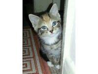 Beautifull kittens!!!