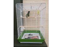 Kakariki bird and cage