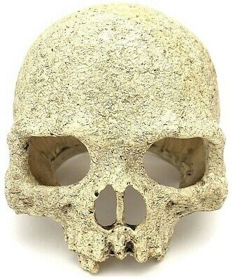 Pet Reptile Terrarium Skull Decoration - Small Amphibian Ornament Head Hide NEW