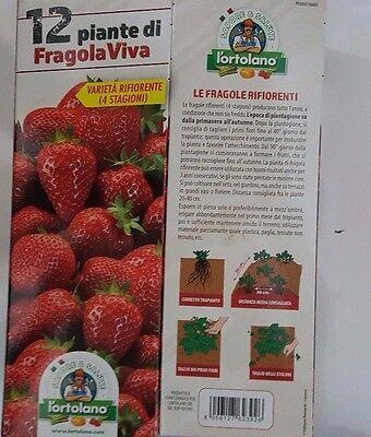 FRAGOLE PIANTE DI FRAGOLA VIVA RIFIORENTE (4