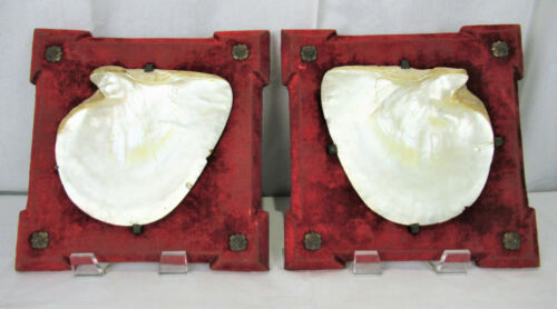 Pair Large Antique Victorian Clam Shell Mounted Plaques