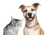 Mature lady pet sitter, North Belfast and Newtownabbey.