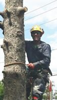 Applewood Tree Service