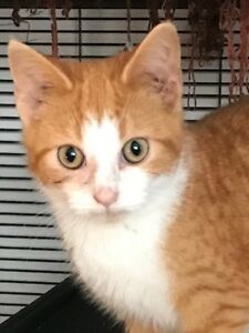 6 month old male- neutered