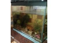 Free cold water fish and tank