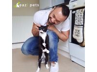 Pets sitting service, with lot of love & care. Dog sitter and cat sitter in Birmingham and Solihull