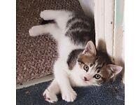 Beautiful kittens boys
