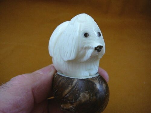 (tne-dog-ma-513c) white Maltese DOG TAGUA NUT Figurine Carving Vegetable dogs