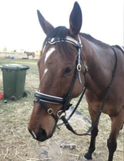 Wanted: Wanted a nice friendly horse for a beginner