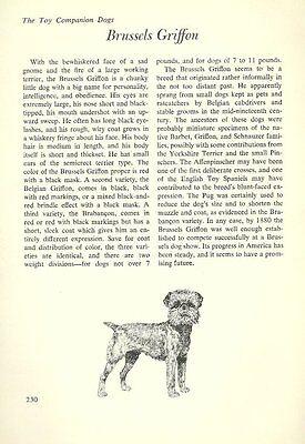 The Brussels Griffon   Vintage Dog Art Print   Matted  G