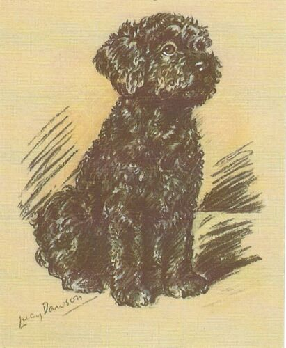 Poodle Puppy - MATTED Dog Print - Lucy Dawson
