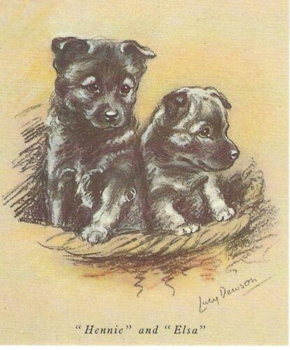 Norwegian Elkhound Puppy - MATTED Dog Print - Lucy Dawson