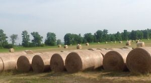 Hay for Sale alfalfa/timothy
