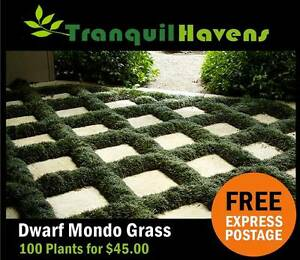 Dwarf ⁄ Mini Mondo Grass - 100 Plants for $45.00 Express delivery Brisbane City Brisbane North West Preview