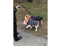 Dog walking service Wrexham