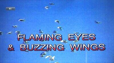 Flaming Eyes & Buzzing Wings  Racing Pigeon Dvd