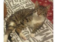 Missing cat named Jack