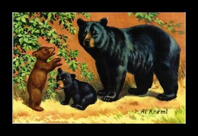 DR JIM STAMPS US BLACK BEARS AL KREML TOPICAL GREETINGS POSTCARD