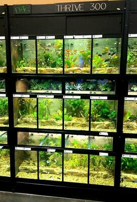 Aquatic Fish Plant Aquarium Retail Display System Commercial Vertical Fish Rack