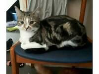 9 month old tabby kitten