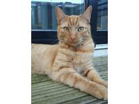 Handsome tabby looking for a new home.