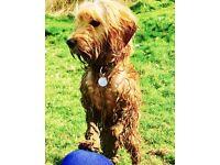 Canine companions: Animal care
