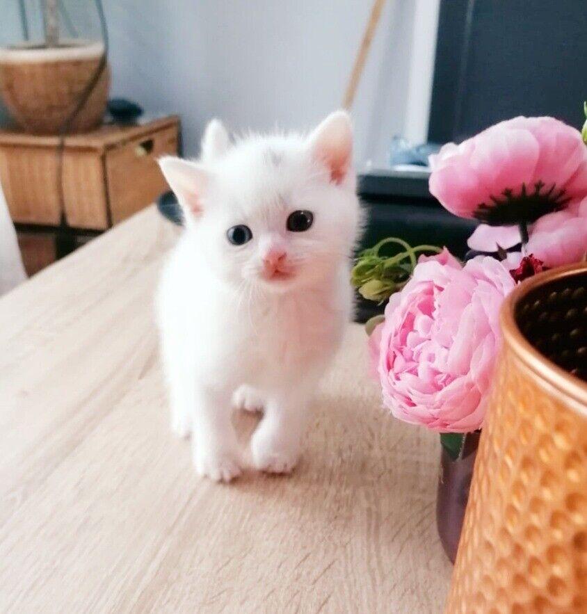Adorable Kittens For Forever Homes