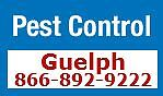 Pest Control Guelph & Area Affordable & Reliable-866-892-9222