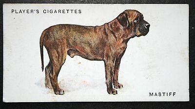 Old English Mastiff   Early 1930's Original Vintage  Colour Card  # VGC