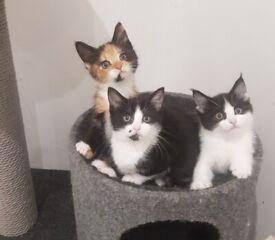 Gorgeous kittens for sale 2 left.