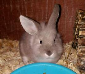 10-week-old bunny last remaining boy