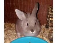 10-week-old bunny last remaining