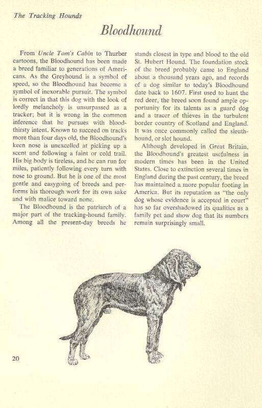 "The Bloodhound - Vintage Dog Art Print - Matted ""G"""