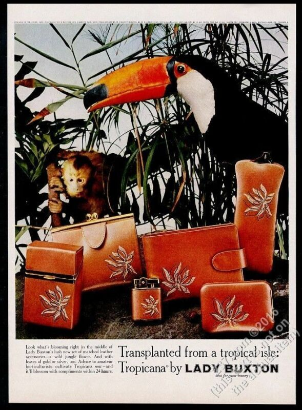 1959 toucan and monkey photo Lady Buxton Tropicana purse cases vintage print ad
