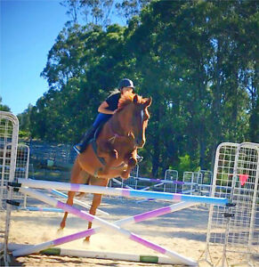 Liberty, Bitless, Bridless for Dressage and Jumping Buln Buln Baw Baw Area Preview