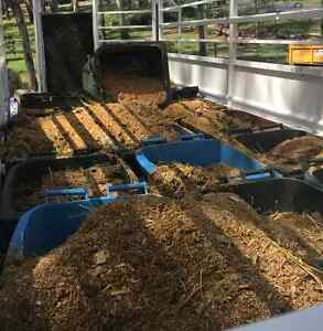 Stable Manure and Clippings Bowen Hills Brisbane North East Preview