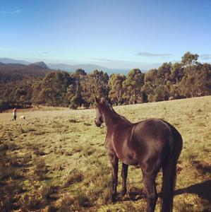 Beautiful rural acreage with ocean views - Bream Creek, Tasmania. Kellevie Sorell Area Preview
