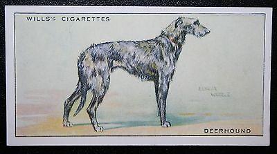 Scottish Deerhound   Superb Original 1937 Vintage Card # VGC