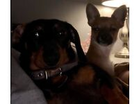 Two dogs in need of re homing together