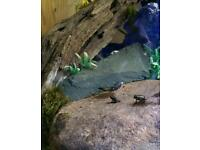20 Common Frogs With Tank/Aquarium *Can Deliver*