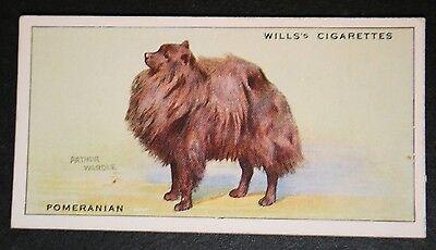 POMERANIAN   1930's Original Vintage Coloured Card # VGC