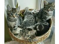 Bengal x beautiful babies