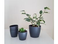 Elho plant pots