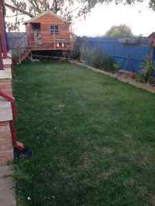 Sir Walter turf lawn Currambine Joondalup Area Preview
