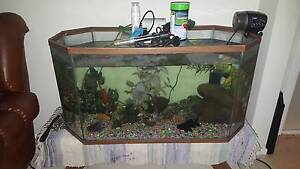 Fish Tank 150L with air pump, 3 x gold fish, filter, rocks. Werrington Penrith Area Preview
