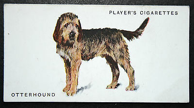 OTTERHOUND    Original 1931 Vintage Illustrated Card  # VGC