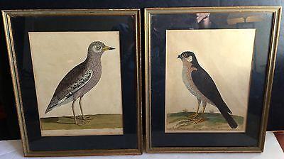 Circa 1737 Pair of Bird Engravings Hand-Colored by Eleazar Albin Framed Rare
