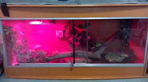 Vivarium Snake Reptile Enclosure Wannanup Mandurah Area Preview