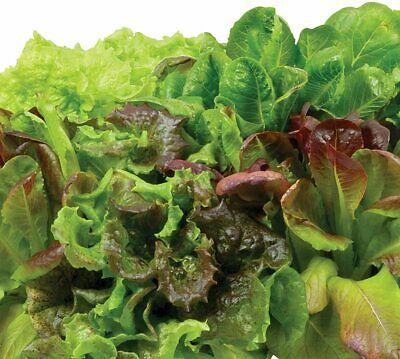AeroGarden – Heirloom Salad Greens (9-Pod) – Green